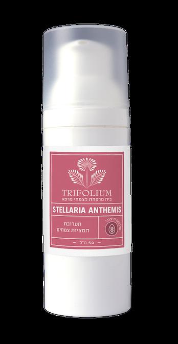 קרם Stellaria Anthemis